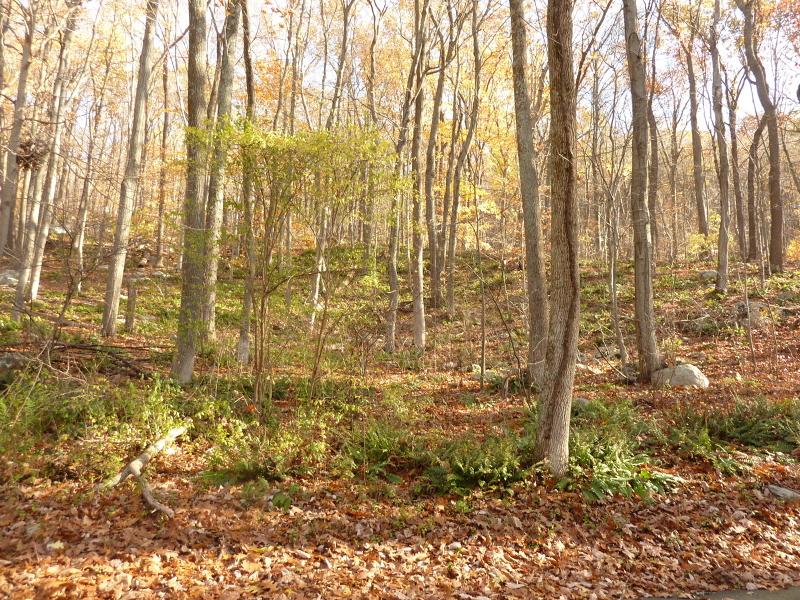 Additional photo for property listing at 48 Tamarack Road  Belvidere, 新泽西州 07823 美国