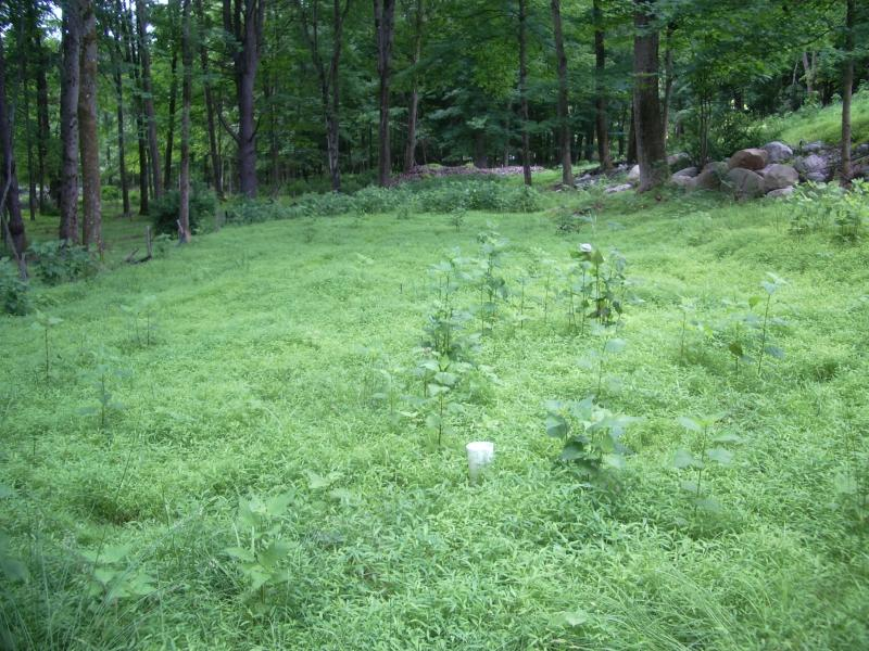 Additional photo for property listing at 32C FOX HOLLOW Road  Montague, New Jersey 07827 États-Unis