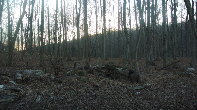 Additional photo for property listing at 100 State Park Road  Blairstown, Нью-Джерси 07825 Соединенные Штаты