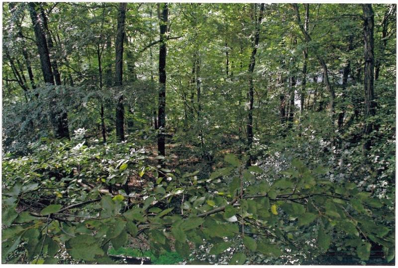 Additional photo for property listing at 36 Lenape Drive  Montville, Нью-Джерси 07045 Соединенные Штаты