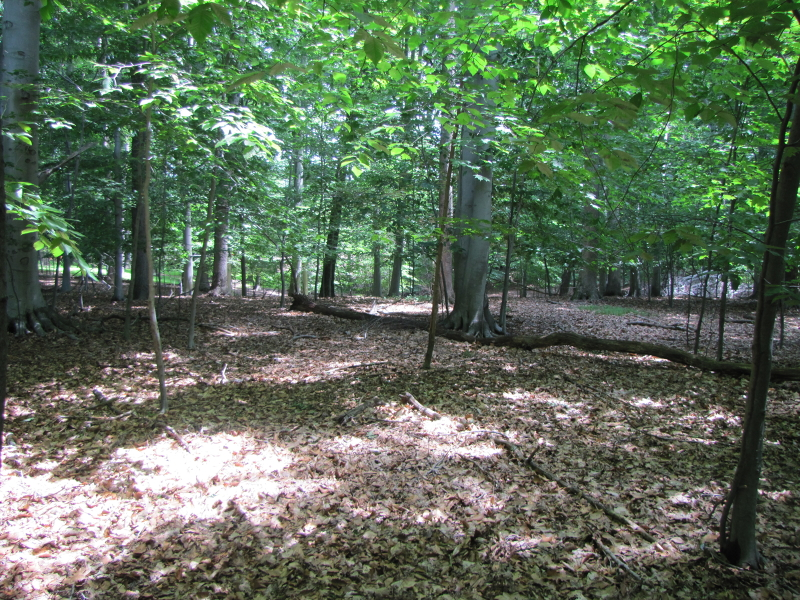 Land for Sale at 1050 Littleton Road Parsippany, New Jersey 07054 United States
