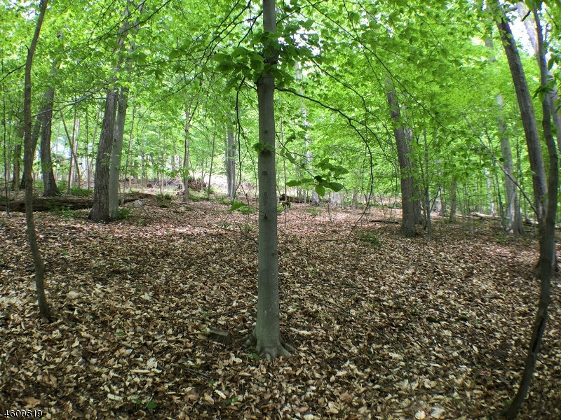 Additional photo for property listing at 87 Cherryville Hollow Road  Flemington, New Jersey 08822 États-Unis