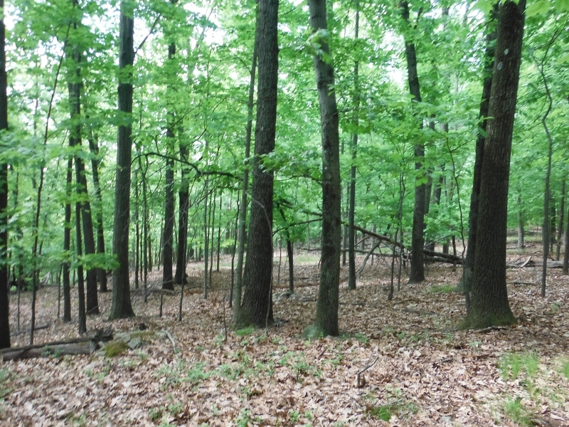 Additional photo for property listing at HURD Street  Mine Hill, Nueva Jersey 07803 Estados Unidos