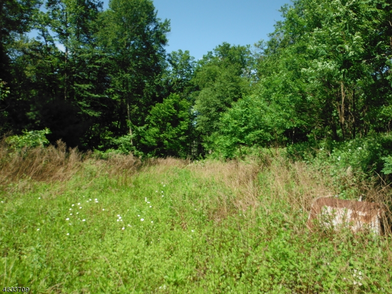 Additional photo for property listing at 463 US Highway 206  Branchville, New Jersey 07826 United States