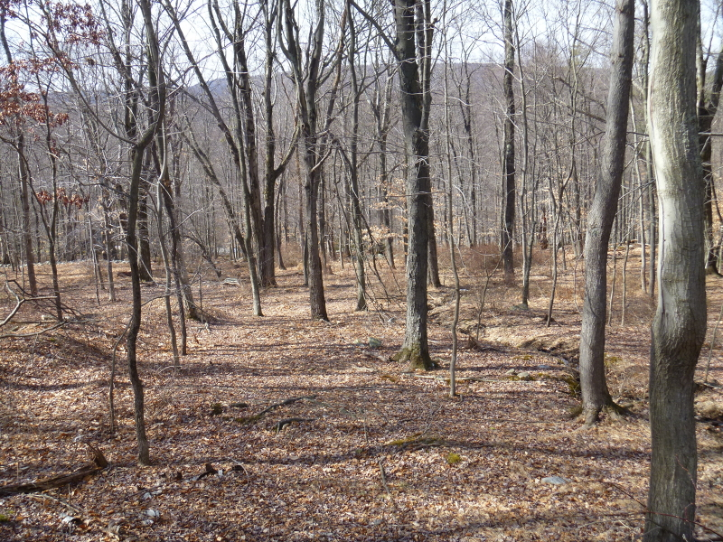 Additional photo for property listing at 82 Mohican Road  Blairstown, New Jersey 07825 États-Unis