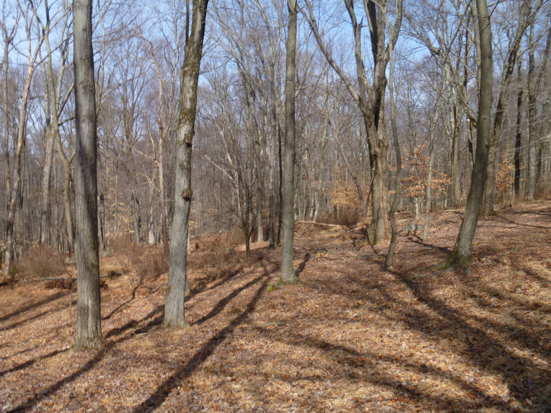 Additional photo for property listing at 82 Mohican Road  Blairstown, Nueva Jersey 07825 Estados Unidos