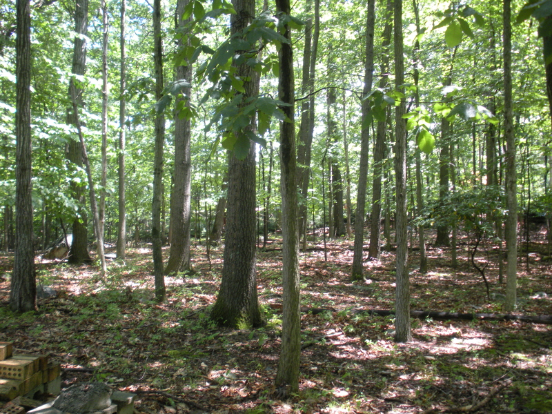 土地 为 销售 在 35 Dale Road 令伍特, 新泽西州 07456 美国