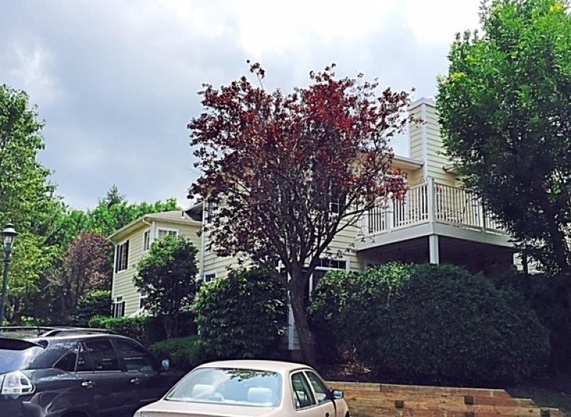 独户住宅 为 出租 在 74 Wescott Road 贝德明斯特, 新泽西州 07921 美国