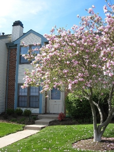 Single Family Home for Rent at 51 Woodward Lane Basking Ridge, New Jersey 07920 United States
