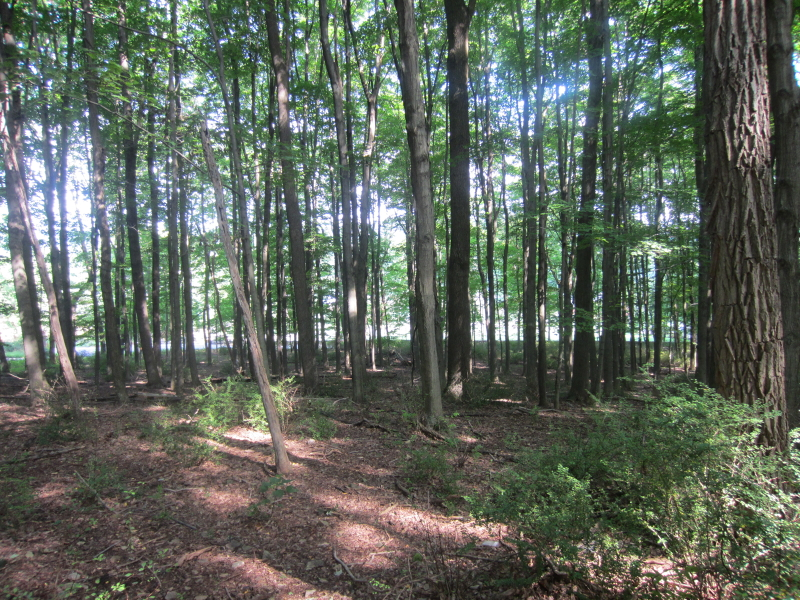 Land for Sale at 74 ROXITICUS Road Far Hills, New Jersey 07931 United States