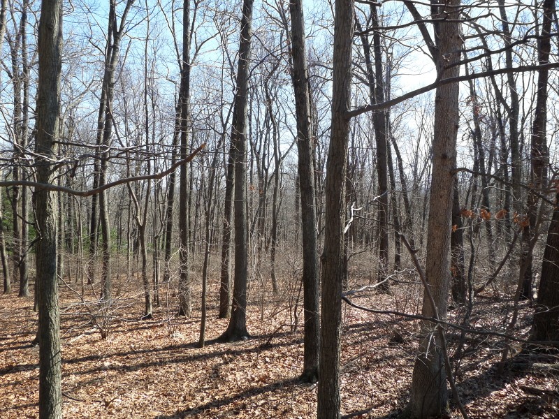 Additional photo for property listing at 28 Danville Mountain Road  Great Meadows, Нью-Джерси 07838 Соединенные Штаты